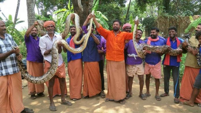 Python Thrissur