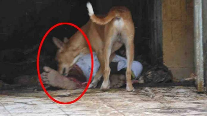 dog eats dead body