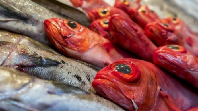 presence of formaline being tested in fish