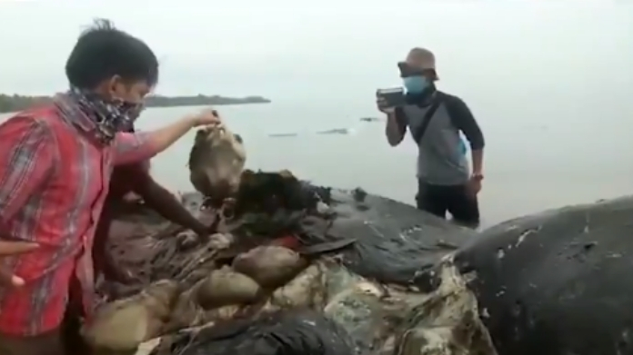 thousands of plastic found in dead whale stomach video