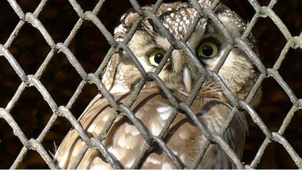 man brutally killed owl for black magic