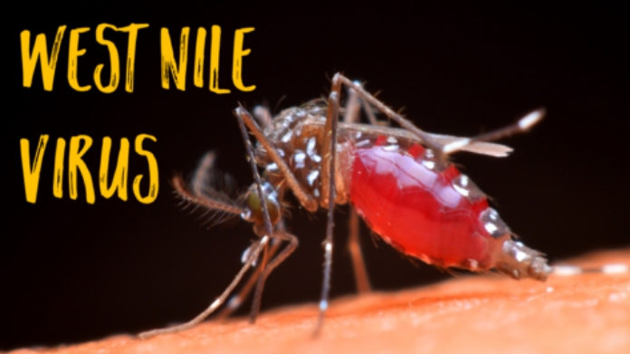 all about west nile disease