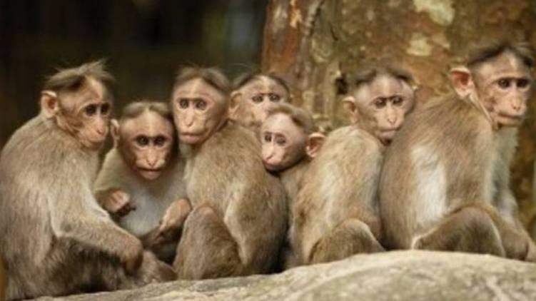 one more monkey fever (Kyasanur Forest Disease) case confirmed in Wayanad