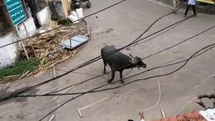 Buffalo attack in Kollam chandanathope