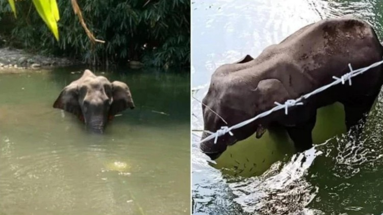 elephant hate mongering malappuram