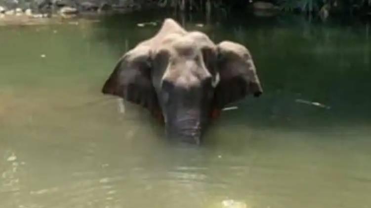 Palakkad Elephant