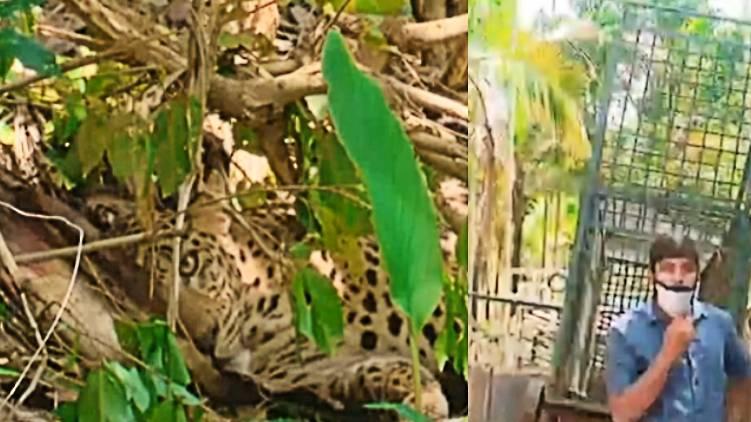 leopard wayanad escaped