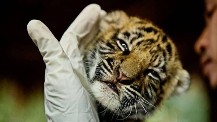 wildlife crime investigation unit police