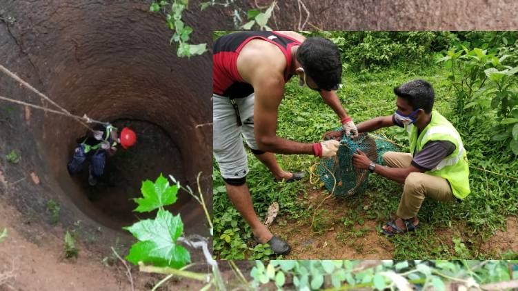 stray dog rescued from well malappuram
