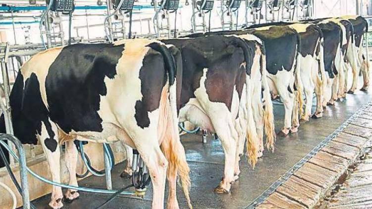 dairy revolution