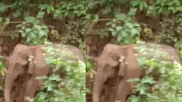 elephant malappuram