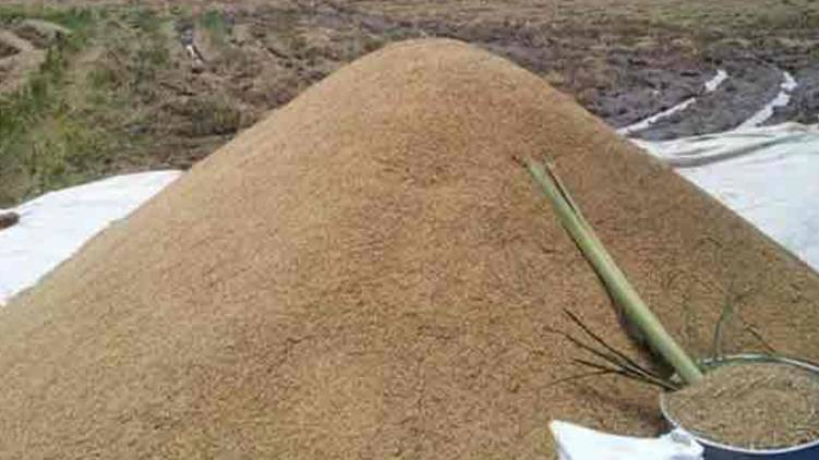 Thrissur Supplyco procured 99961 tonnes of paddy