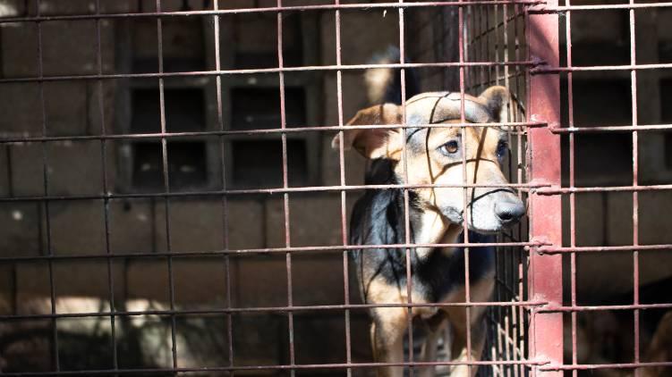 nagaland bans dog meat
