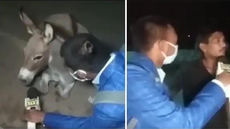 Reporter interviews donkey