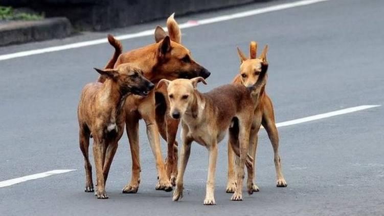 stray dog kerala