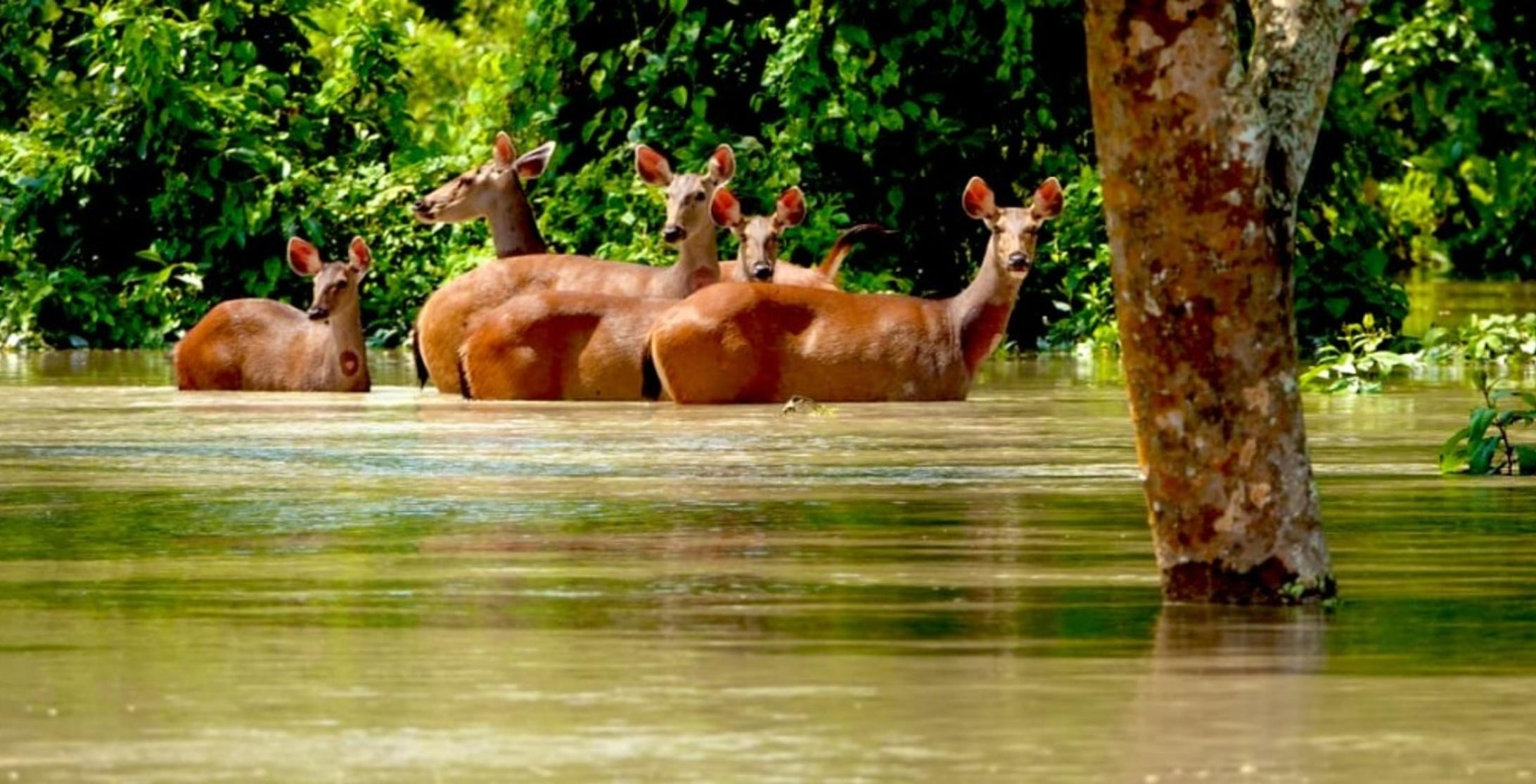 Kaziranga National Park Cannot Survive Without Annual Floods