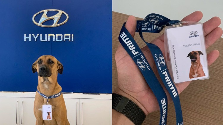 Hyundai Dog Car Salesman