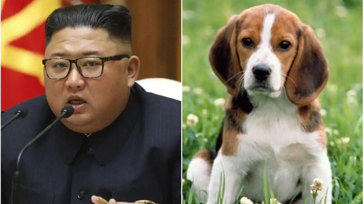 kim jong un dogs