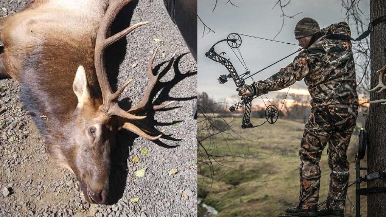 Bow hunter death elk