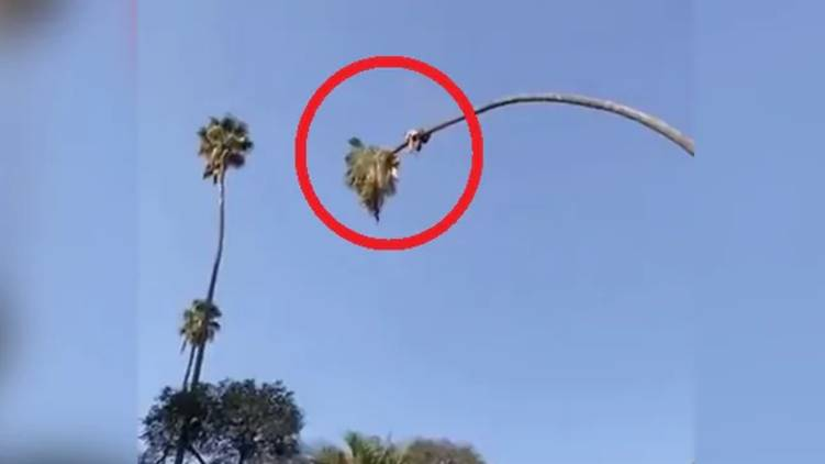 tree cutting video goes viral