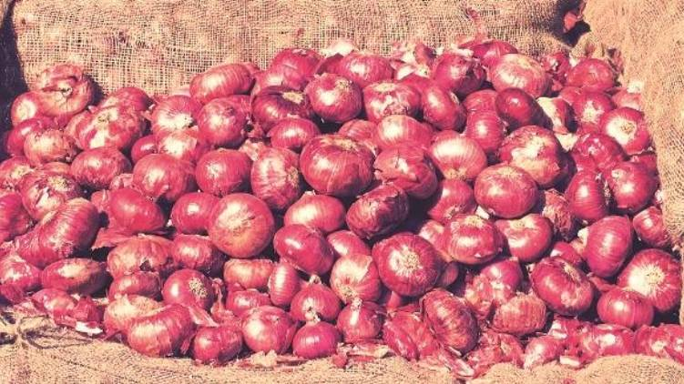 center relaxes onion import