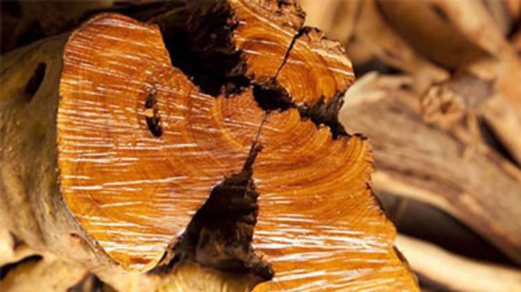two crore worth sandalwood seized