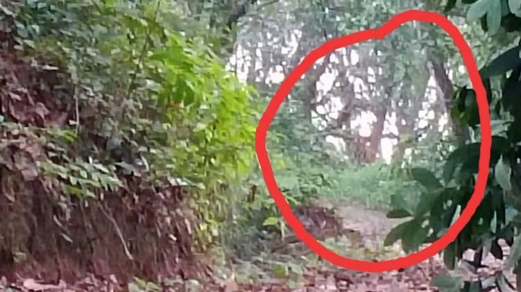 tiger found neyyar