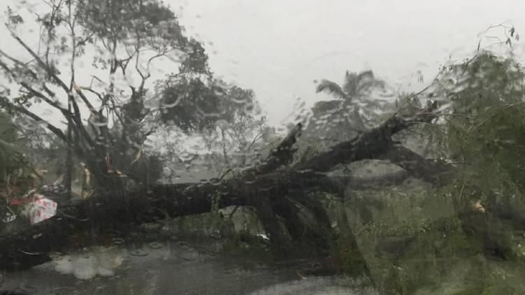 rain tree fall down