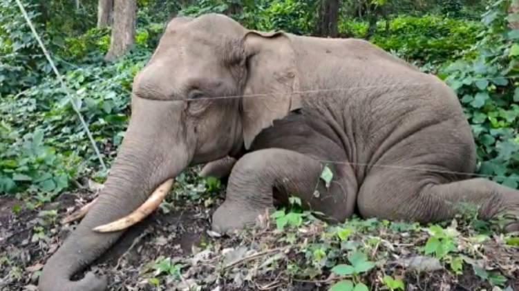 wild elephant, dead. Thrissur