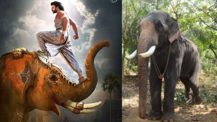 kalidasan elephant