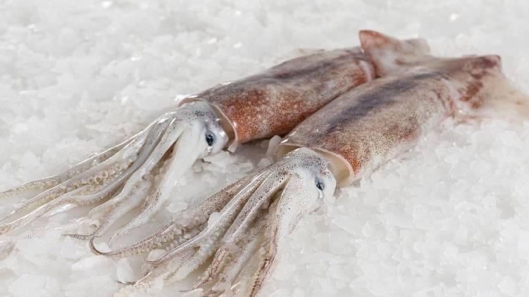 coronavirus in cuttlefish