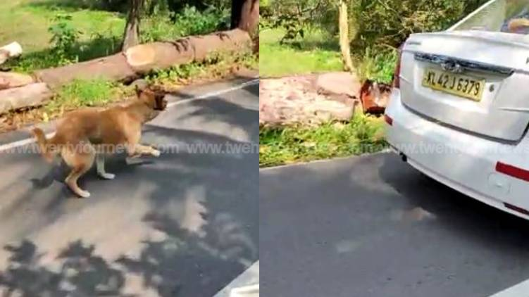 driver who dragged dog identified