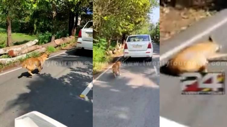 paravur dog dragged behind running car