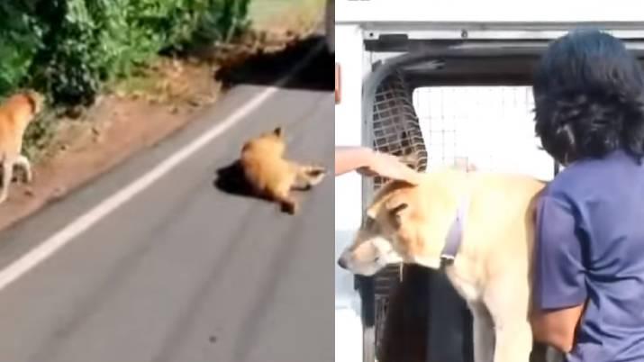 dog tied in car