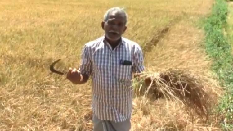 thrissur chelakkara paddy fields