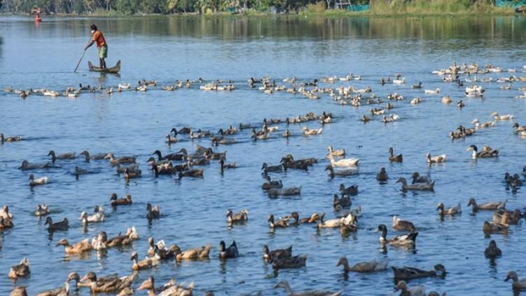 bird flu compensation inadequate