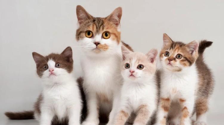 deaths cats virus disease