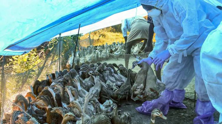 bird flu wont spread to humans says minister