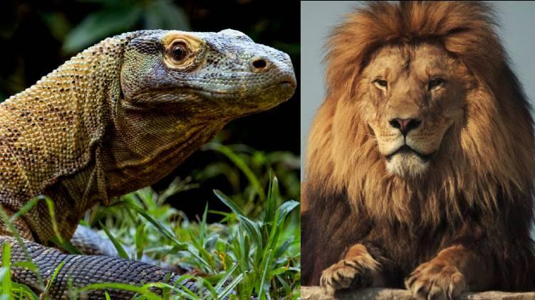 ambani plans worlds biggest zoo