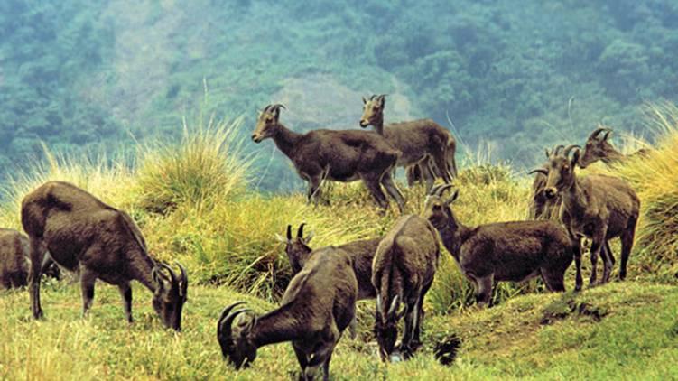 munnar eravikulam national park closed