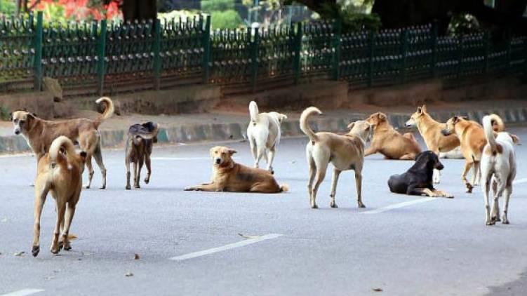 7 children attacked by stray dog