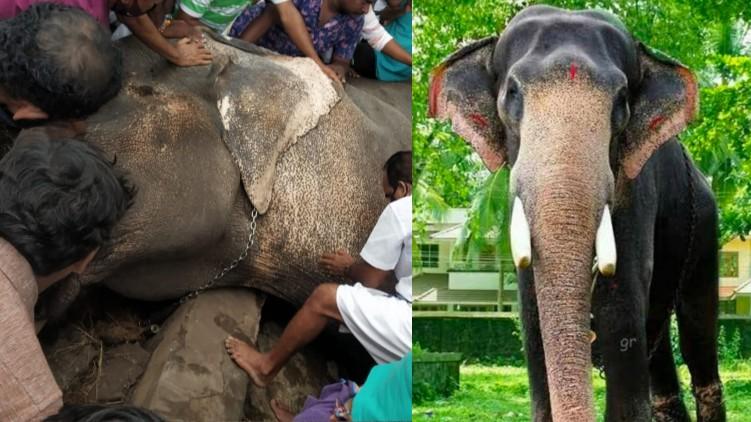 Elephant Ambalappuzha Vijayakrishnan died