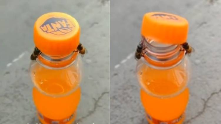 Bees Opening a Soda Bottle
