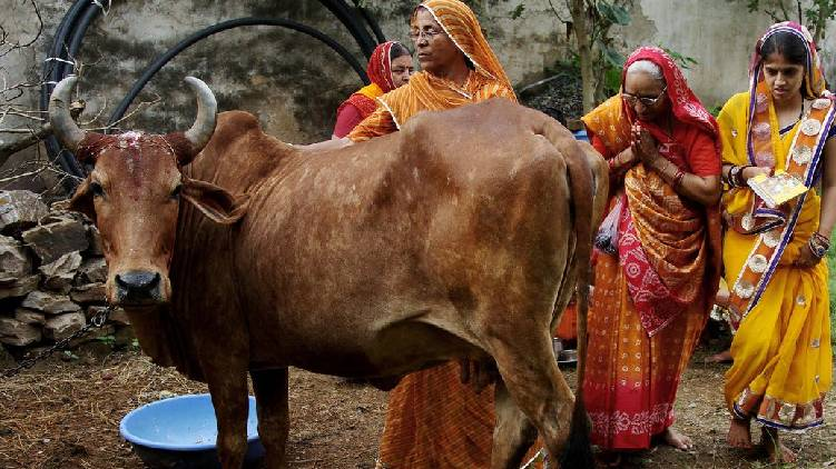 cow protection law assam