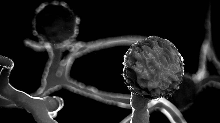 black fungus confirmed in kollam