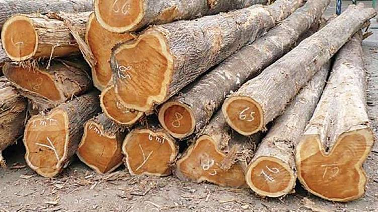 106 wood cut finds forest dept on muttin wood robbery