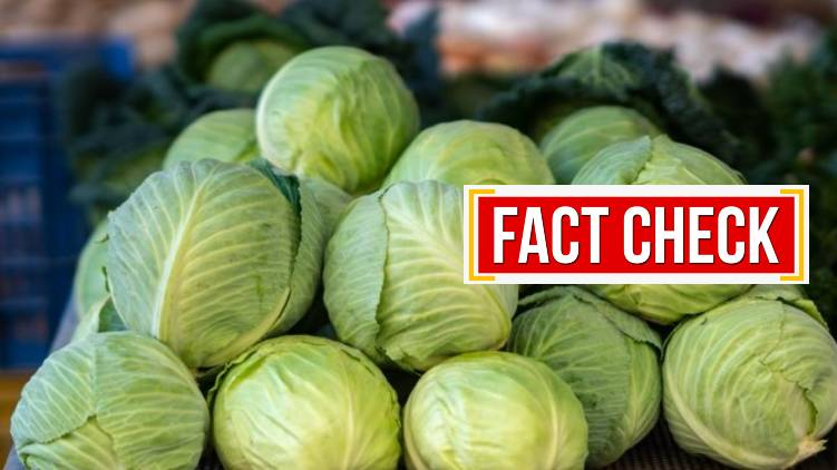 Do cabbages spread Covid 24 fact check