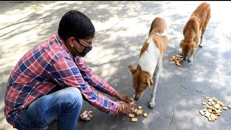Bengaluru 15 lakh stray