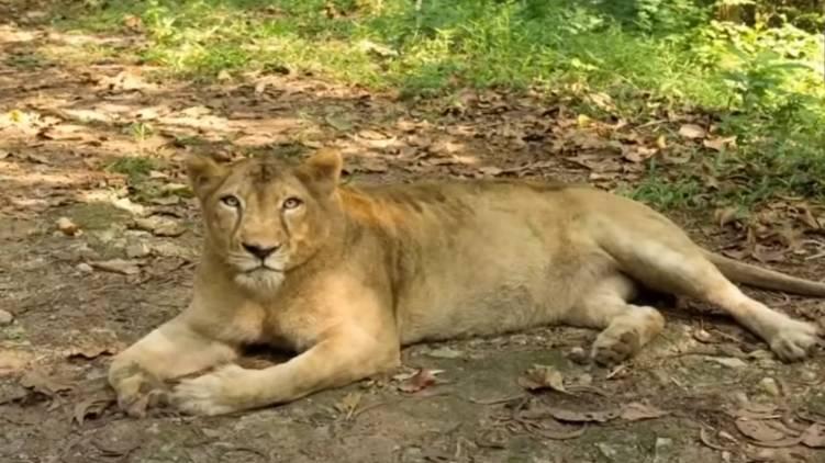 neyyar lions safari park bindu died