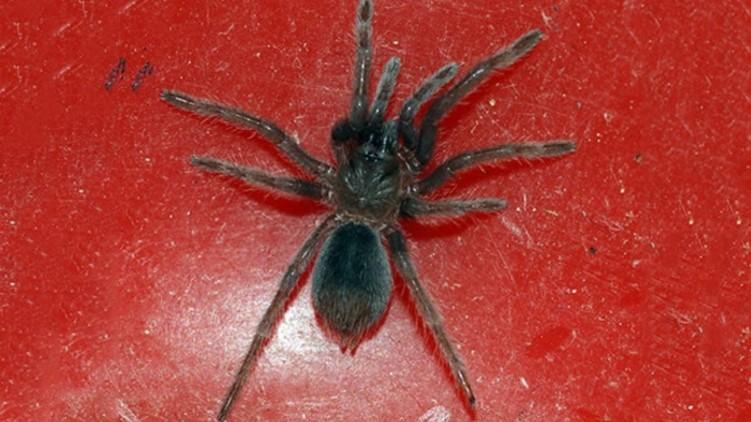 Live Spiders Inside Parcel